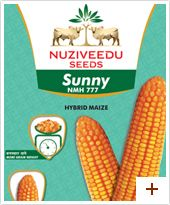 Maize : Sunny – NMH 777 Plant height : Tall(230-270cm) Duration : Kharif-105-110 days, Rabi-115-120 days Ear placement : Medium Grain type and colour : Orange yellow Ear : Long with medium girth Special features/USPs :      * Uniform cob size with excellent tip filling     * Orange yellow semi-dent Bold kernels     * Stable yielder in moderate stress conditions     * Suitable for rainfed