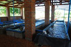Art's Activities: Fish Farm, Malawi, Africa