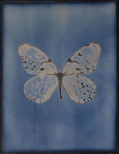 Adam Fuss (born Butterfly, from My Ghost series, Photo Wall Collage, Picture Wall, Collage Art, Fotojournalismus, Psychedelic Art, Blue Aesthetic, Pretty Pictures, Oeuvre D'art, Aesthetic Pictures
