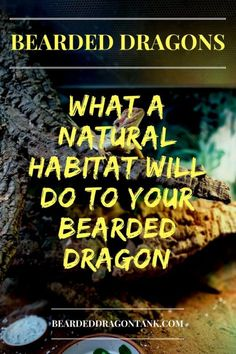 Have you ever wondered which plants you can use for your bearded dragon tank? Read this article to see which plants will do well in your tank! Bearded Dragon Funny, Bearded Dragon Cage, Bearded Dragon Habitat, Reptile Show, Reptile Habitat, Reptile Cage, Reptile Enclosure, Gecko Habitat, Reptile Pets