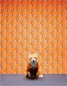 Beautiful animal, nice wallpaper