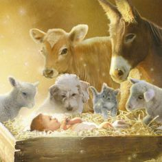 Simon Mendez - SM - nativity animals and manger Christmas Scenes, Christmas Nativity, Christmas Pictures, Christmas Time, Christmas Cards, Christmas Printables, Winter Pictures, Religious Pictures, Jesus Pictures