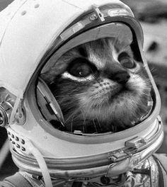 #space #cat