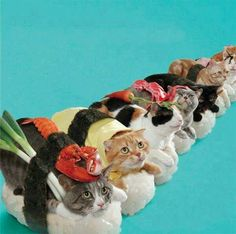 SUSHI CATS! Posting this solely for my niece, Caitlin, who loves both sushi and cats!