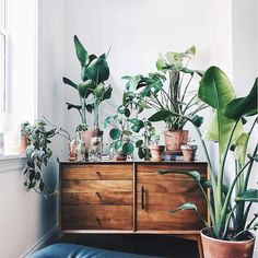 """11.8k Likes, 81 Comments - west elm (@westelm) on Instagram: """"Did you know our Mid-Century console doubles as a great plant stand?  Shop the whole collection on…"""""""