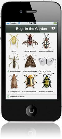 "Identification of the bug is the first step to controlling the infestation. Try the ""bugs in the garden/field app"" available for iphone and android."