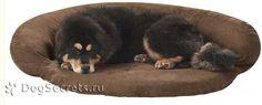 Виды лежаков для собак