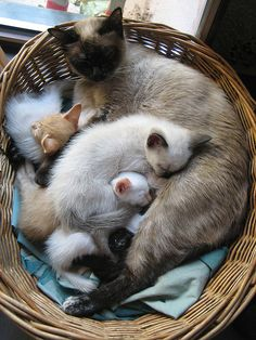 cats in basket!