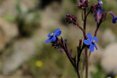 Фотография flower автор tiko gogolauri на 500px