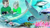 Sydney Attractions Pass: SEA LIFE Aquarium, Sydney Tower Eye, WILD LIFE Zoo, Madame Tussauds and …