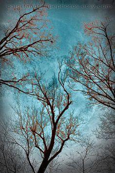 ❧ Couleur : Brun et bleu ❧
