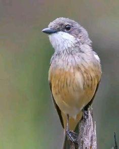 Cute Birds, Pretty Birds, Small Birds, Colorful Birds, Animals And Pets, Funny Animals, Cute Animals, Most Beautiful Birds, Animals Beautiful