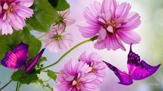 imagenes bonitas para fondo de pantalla para celular de flores