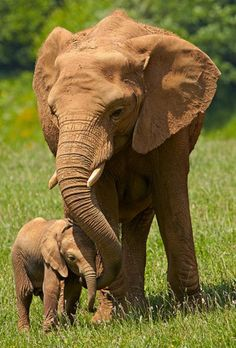 Mommy & baby elephant!! #ivoryforelephants #elephants #stoppoaching