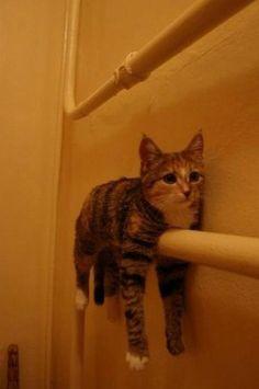 I'm a towel.