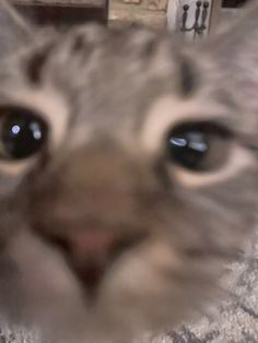 Funny Cute Cats, Cute Baby Cats, Pretty Cats, Beautiful Cats, Funny Animal Pictures, Funny Animals, Hamsters, Cat Emoji, Cat Nose