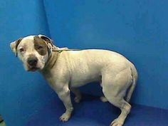 Urgentpetsondeathrow.org  This is snoopy.. he needs fostering or an adopter. He's on the list to be destroyed for 4-17-13. Please see the website for more Information on the 20 dogs on tomorrows list.