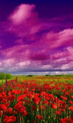 Wild Flowers - Flowers Wallpaper ID 1785870 - Desktop Nexus Nature New Wallpaper Hd, Scenery Wallpaper, Wallpapers, Desktop Backgrounds, Beautiful Gif, Beautiful Pictures, Champs, Purple Sky, Sky And Clouds