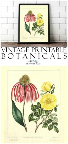 Stretch your decorating budget by using this library of free printable botanicals (a set of 10) to make your own DIY wall art! #printable #freeprintable #botanical #botanicalprint #vintageprint #vintage