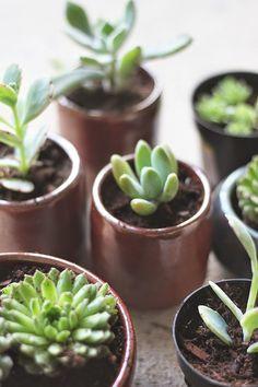 hello hydrangea: How to Repot Succulents