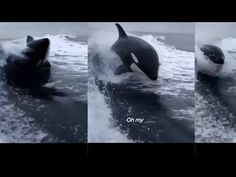 WHALE JUMPS #SAVEOUROCEANS - YouTube Save Our Oceans, Whale, Planets, Places To Visit, Batman, Superhero, Amazing, Youtube, Animals