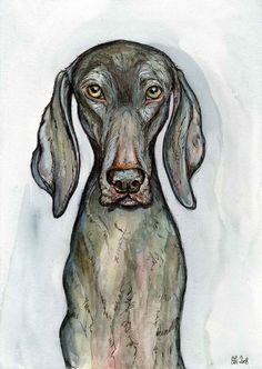 A Little No Nonsense - Weimaraner Art Dog Print. £15.00, via Etsy.