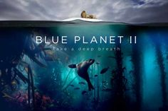 Blue Planet II - HD Documentary Series