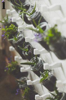 Riutilizza i barattoli in vetro per coltivare piantine di aloe vera.