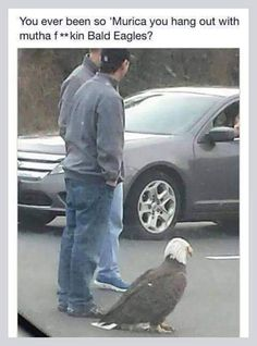 Those Things Are Like Pigeons In Alaska/////really?