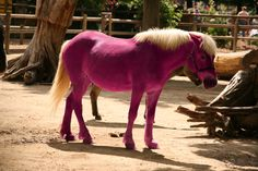 pink pony - Google Search