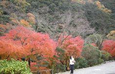 in Tokushima Japan