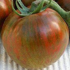 Black Zebra heirloom tomato seeds - Garden Seeds - Vegetable Seeds