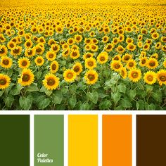 Color Palette #3397