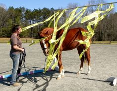 Alternative to flyspray?  (Or training a horse to be calm in unusual situations)