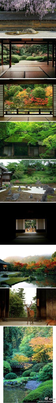 日本庭園,极富禅韵。Japanese garden