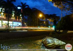 #vamoskigo | Snail Crossing | Singapore | Walking late at night through the beautiful streets of Singapore, Dos Trotamundos found this little guy waiting to cross the road.
