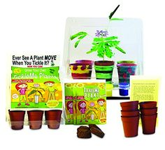 "TickleMe Plant Deluxe Greenhouse Kit with Paint Set For Kids with Fun Activity Science Card "" Grow the only House Plant that closes its leaves and lowers it branches when you Tickle It) 