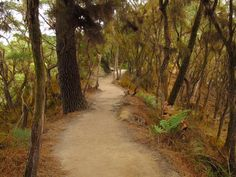 # Wai-O-Tapu Thermal Wonderland, Rotorua