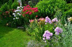 Картинки по запросу phloxes roses