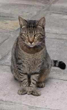 Hemingway six-toed cat
