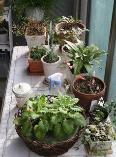 Look! Tiny Tokyo Garden