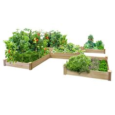 Customizable Easy Assembly Cedar Wood Raised Garden Beds - These dovetail cedar raised beds are modular so you can design your ideal raised bed garden layout. Wood Raised Garden Bed, Elevated Garden Beds, Raised Beds, Cedar Garden, Gravel Garden, Fence Garden, Garden Planters, Deer Fence, Garden Frame