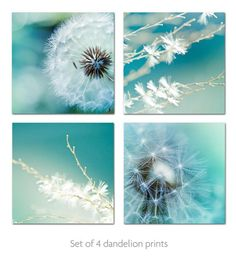 Dandelion photography nature photography set Fine art photography 8x8 macro photography - botanical print blue wall art clickety summer teal on Etsy, $69.00