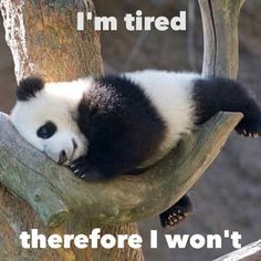 Some days this is true - we all have them || No worries though || Slowly wake up || Funny lazy sleepy baby panda cub meme || Daily cuteness || I'm tired therefore I won't