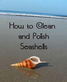 How to clean & polish seashells