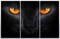 3 Panel split black cat Canvas Print with orange eyes .Gallery wrap for home office wall decor and interior decor. Great for Holiday gifts