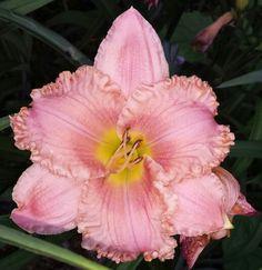 Pink seedling!