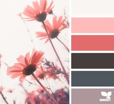 white pink black gray