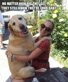 Hilarious Struggles All Dog Owners Will Understand – 15 Pics