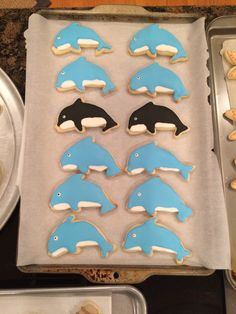 Orcas and Dolphins